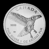 Moneda de Plata Serie Aves de Rapiña | Halcón de Cola Roja 2015 de 1 oz